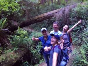 En Redwood National Park