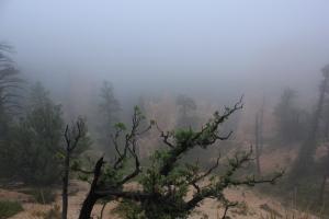 Lo poco que pudimos ver de Bryce Canyon